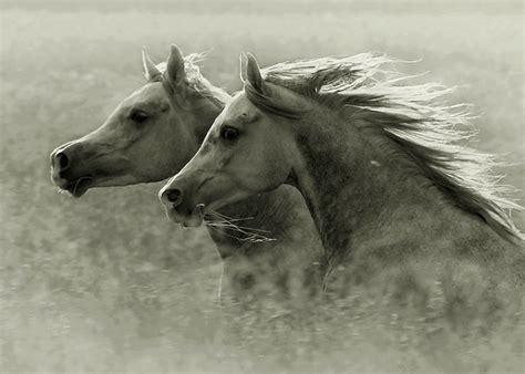 imagenes artisticas de caballos hermosas imagenes de caballos salvajes taringa