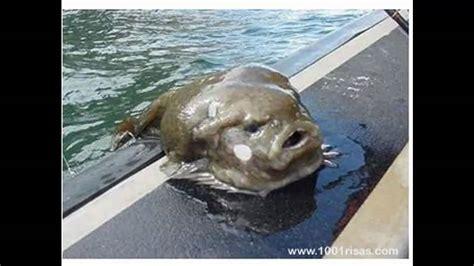 imagenes extrañas del mar criaturas raras y extranas 2 youtube