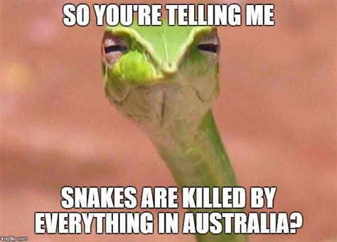 Snake Meme - 20 weird snake memes sayingimages com