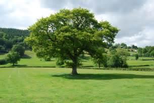 tech exchange trees
