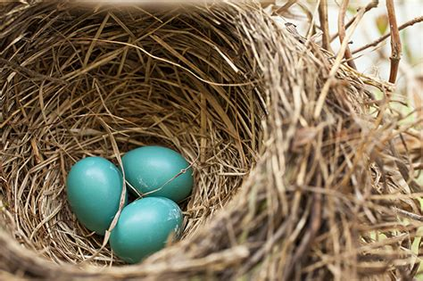 robin s egg blue chichomeantiquesblog