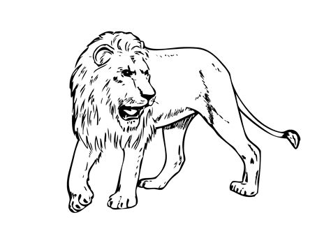 real animal coloring page best shots coloring pages of