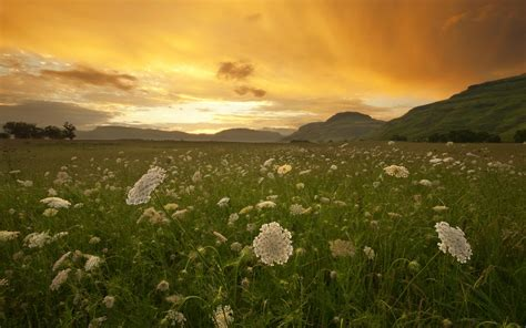 meadow 1680 x 1050 sunriseandsunset photography miriadna com