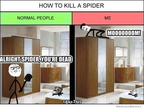 Killing Spiders Meme - how to kill a spider weknowmemes