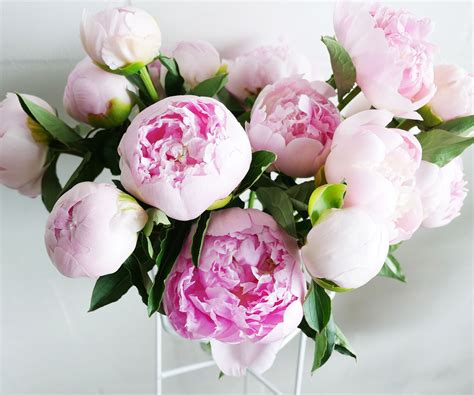 Diy Bedrooms 5 tips for perfect peonies