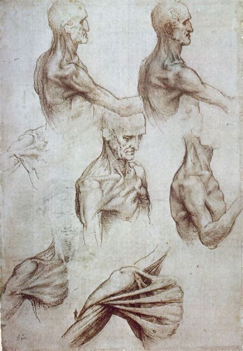 Sketches Leonardo Da Vinci by Leonardo Da Vinci Anatomist At The Royal Gallery