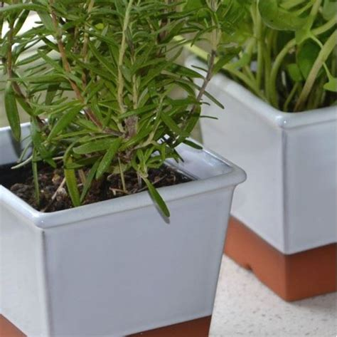 ckb ltd windowsill pots and tray herb planter gift set herb pots for windowsill windowsill herb pot white weston