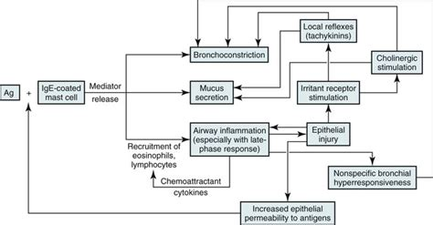 how to make a pathophysiology diagram how to make a schematic diagram pathophysiology circuit