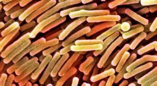 Deadly Remedy surprising remedy for deadly hospital infections