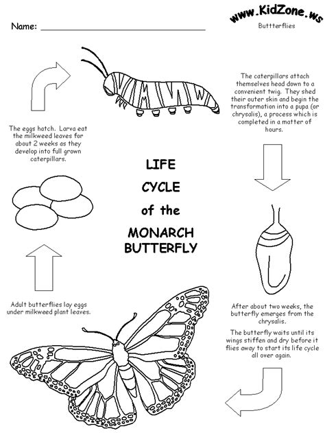butterfly life cycle coloring sheet homeschool free printable life cycle of the monarch butterfly