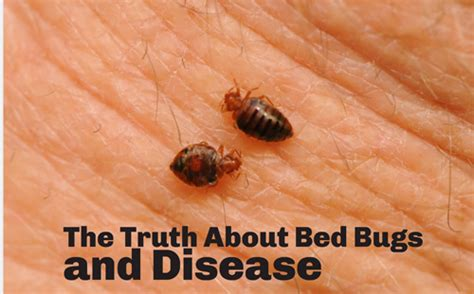 difference between bed bug bites and flea bites mosquito bite bed bug bite difference
