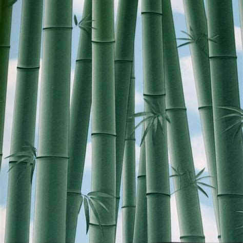 Wallpaper Bamboo Bambu 10m buy wholesale canada forest from china canada