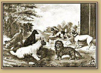 yorkie history history pine yorkies