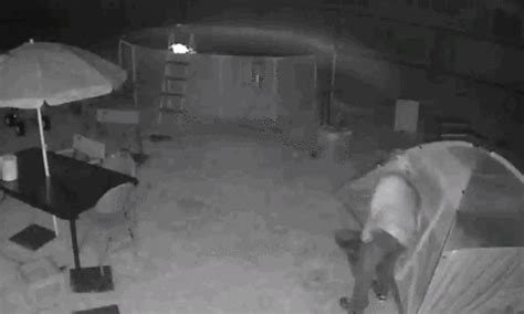 dramatic video (gif) shows alleged sexual predator tackled