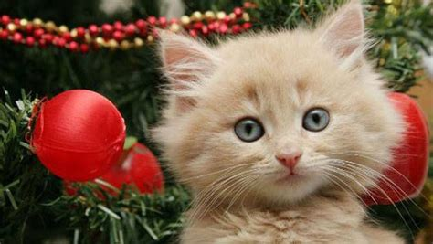 5 ways to cat proof your christmas tree mnn mother