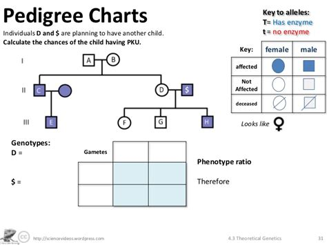 Genetics Practice Problems Pedigree Tables by Pedigree Charts Genetics Problems Genial Genetics