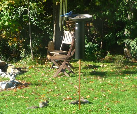 squirrel proof bird feeders ftempo