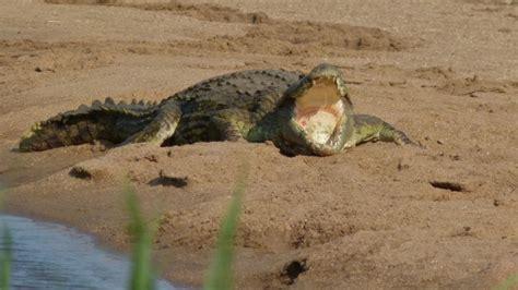 Kaos Splashy Water Colour 11 Tx top 10 grootste krokodillen soorten ter wereld dierenfun