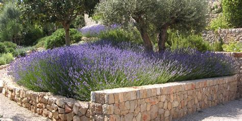 Mediterraner Garten Pflanzen by Mediterraner Garten Pflanzen