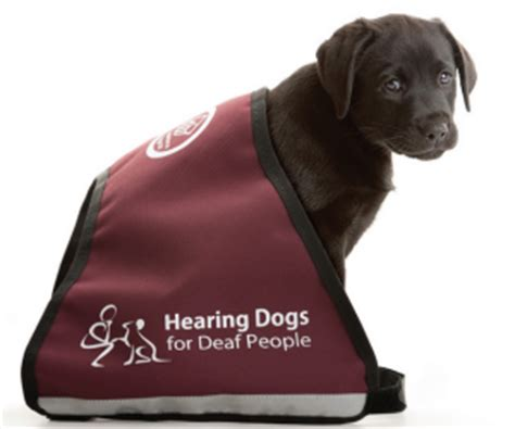 hearing dogs practice management news and views from around the world january 2014
