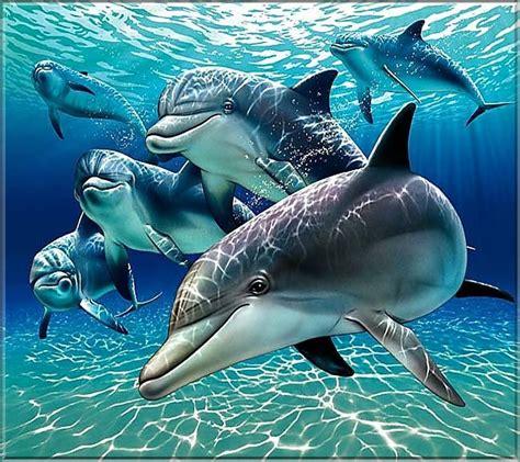 animales del mar gran delf n dolphins screensavers and wallpaper wallpapersafari