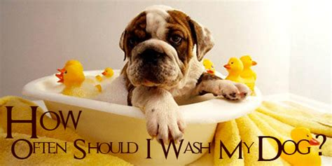 how often should i wash my puppy the in world how often should i wash my breeds picture