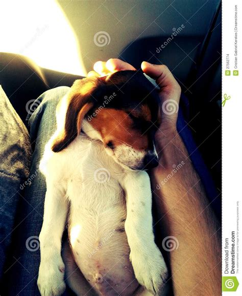 why do dogs lay on their back puppy sleeping on his back