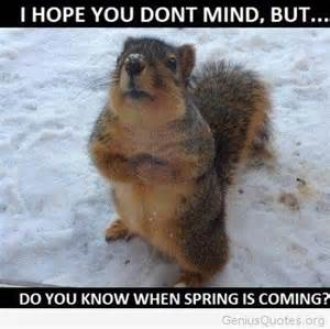 Spring is coming funny