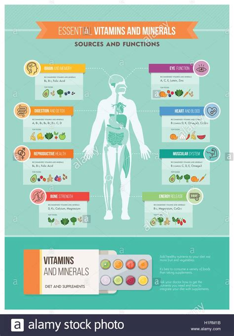 infographics human body nutrition vitamins and health infographics human body organs stock vector art illustration