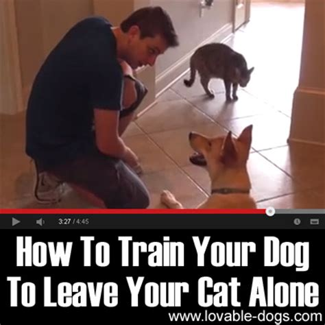 how to house break your dog lovable dogs video how to train your dog to leave your cat alone lovable dogs