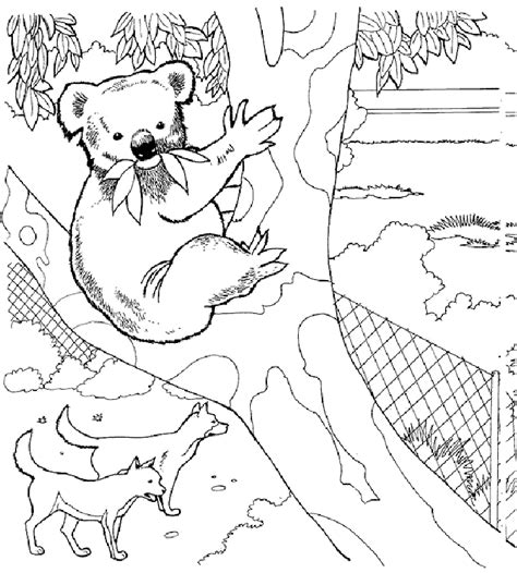 Zoo Coloring Pages For Adults | zoo animal coloring pages koala bear colouring pages
