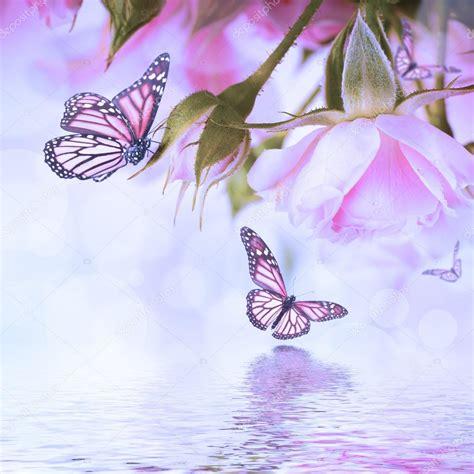 achtergrond bloemen rustig mooie rozen en vlinder bloem bloemen achtergrond