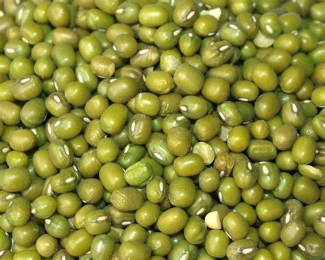 Greenpeaskacang Polong Golden Farm mung bean vigna radiata feedipedia