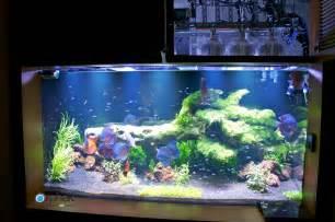 eclairage d aquarium d eau douce plant 233 orphek