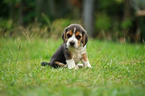 how to a puppy to be an outside when can a puppy safely be outside thriftyfun