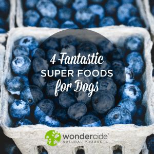 superfoods for dogs 4 fantastic superfoods for dogs