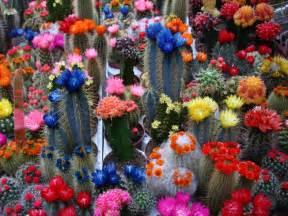colorful cactus colorful cactus