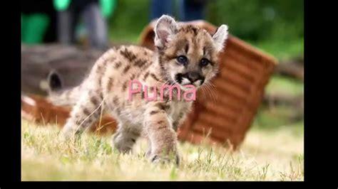 imagenes de animales de mexico animales en peligro de extinci 243 n en m 233 xico youtube