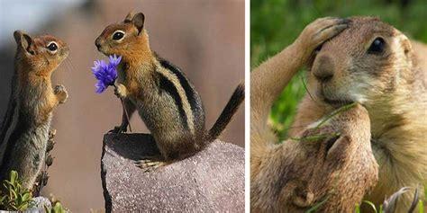 Imagenes De Animales Enamorados | animales enamorados www pixshark com images galleries