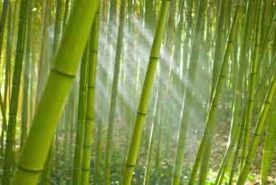 Ideas For Decorating A Small Living Room bamboo removal eradicating bamboo without herbicides