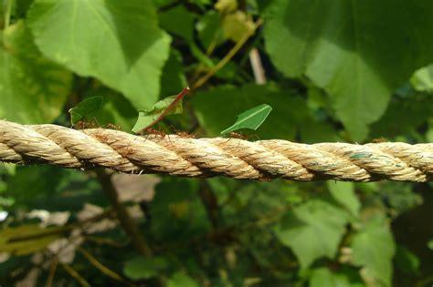eliminare formiche giardino veleno per formiche in giardino immagine titolata get rid