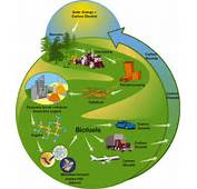 Pros And Cons Of Biomass Energy