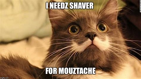 Mustache Cat Meme - image tagged in moustache cat imgflip