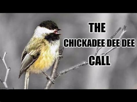 chickadee mating calls free chickadee song mp3 mp3