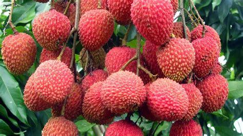 fruit kills diabetes one fruit that kills diabetes