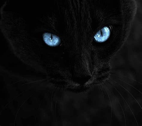 Wallpaper Whatsapp Cats | cute black cats kittens images wallpapers images whatsapp dp