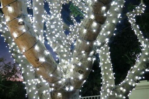 howto wrap christmas lights around tree branches how to wrap trees with outdoor lights