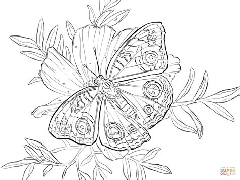 Image Butterfly And Flower Coloring Pages Download Coloring Pages Of Flowers And Butterflies