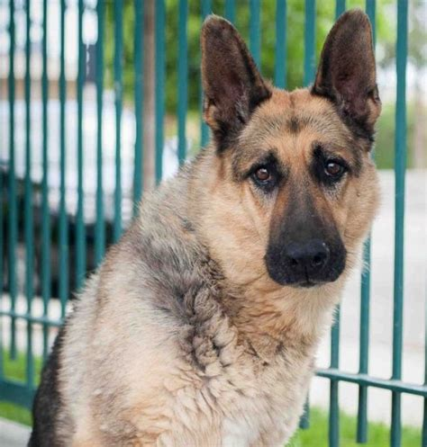 animal shelter dogs animal shelter dogs breeds picture