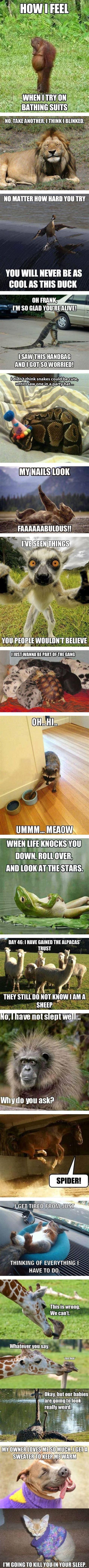 What Is Diy animal memes picmia